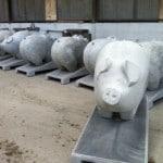 Cochon brute pour la pig parade
